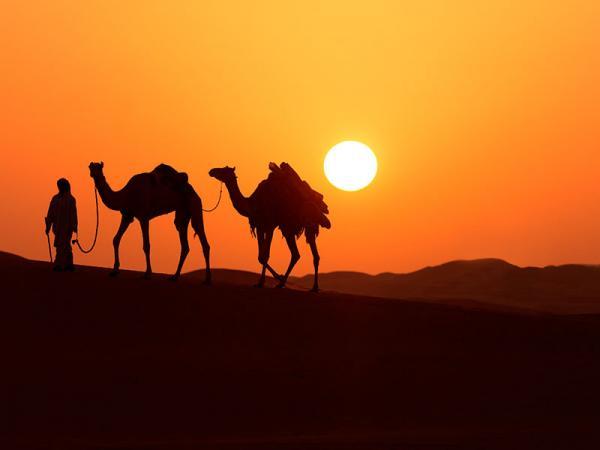Kamelen in de woestijn van Oman en Dubai