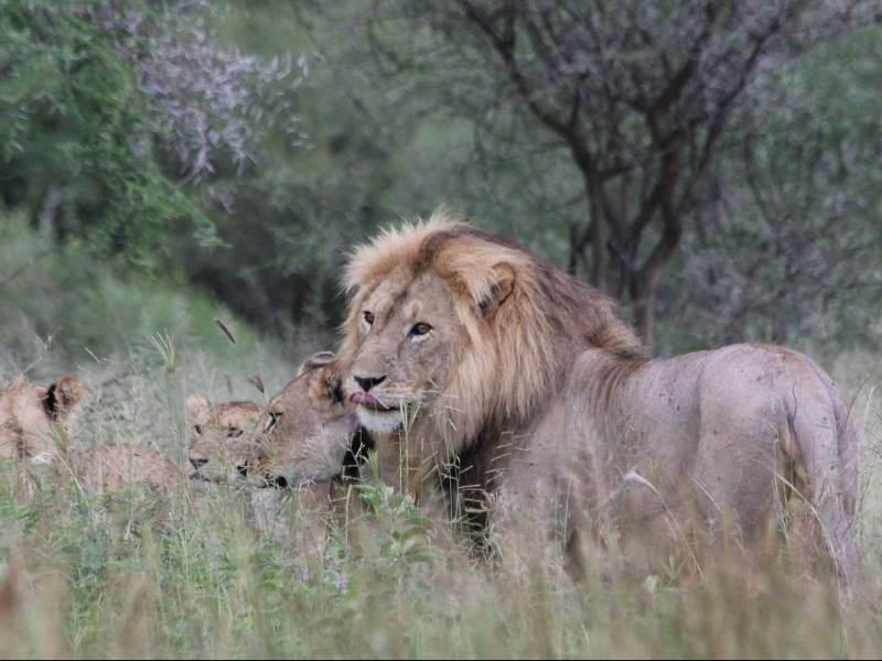 deze wilde dieren, deel van de big five kunt u van dichtbij bewonderen hier in Tanzania